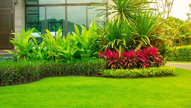 jenis-jenis rumput taman dan cara merawatnya